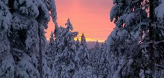 Experience true winter on a tailor-made trip to Swedish Lapland with the chance to see the northern lights. Best Family Ski Resorts, Family Destinations, Falls Creek, Winter Sunset, See The Northern Lights, Day For Night, Ski And Snowboard, Places Around The World, Travel