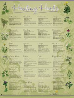 "LearningHerbs.com and Mountain Rose Herbs have teamed up to bring you this gorgeous 18"" by 24"" wall chart. We want to ship this to you today, just for trying HerbMentor. It features 23 important herbs to know. We even have an eBook in HerbMentor that turns this chart into a mini herbal course. Click on the image to the left for a close up view of the HealingHerbs Wall Chart."