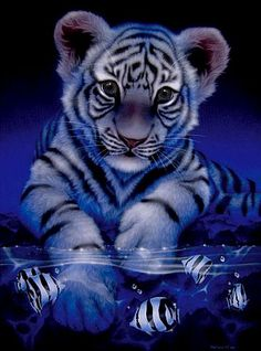 Bengal tigers live in India, Nepal, Bangladesh, Bhutan, Myanmar and in the South of China ( Tibet ).   Its fur is generally orange-brown with black stripes but there are also with Bengal tigers.   It is the national animal of both Bangladesh and India
