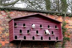 ,Need to read up on doves, could i get then to live in this in my garden?