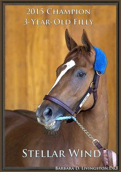 Barbara Livingston @DRFLivingston  14h14 hours ago Congratulations to the connections of 2015 champion 3-year-old filly STELLAR WIND!
