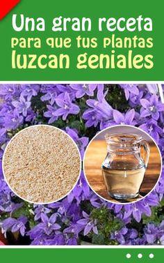 Una gran receta para que tus plantas luzcan geniales. ¡Con solo dos ingredientes!