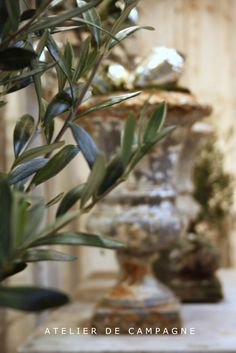 A Detox Fasting Paradise - Pristine Non-public Island - Coconut, The Tree Of Life And Organic And Natural Raw Food Items Olive Tree Branches French Christmas, Christmas Love, All Things Christmas, Olives, Under The Tuscan Sun, Olive Gardens, Gypsophila, Olive Tree, French Decor
