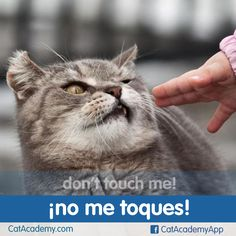 This is one phrase humans should be required to know in at least 5 languages! How is it said in yours?~ Magichttp://is.gd/Cat_Spanish