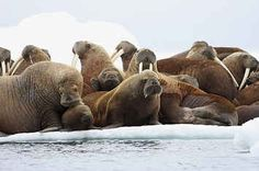 Arctic Has Its Warmest Year On Record As Sea Ice Retreats