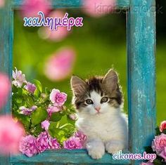 Cats & Pretty things too. Cute Cats And Kittens, Cool Cats, Kittens Cutest, Kitty Cats, Crazy Cat Lady, Crazy Cats, Kitten Quotes, Interesting Animals, Most Beautiful Animals