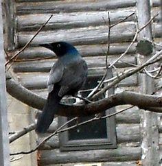 A Comical Look at Angry Bird Photos at my Bird Feeder - News - Bubblews