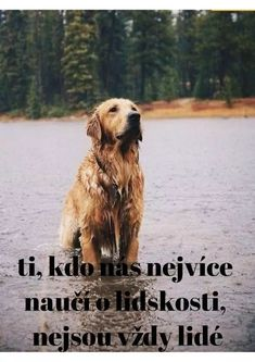 Belgian Malinois, Motto, Best Friends, Messages, Education, Motivation, Pets, Quotes, Nature