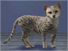 Mod The Sims - Egipet mau The Sims 3 Pets, Sims Games, Grey Cats, Sims 2, Cats And Kittens, Gold Eyes, Cat Stuff, Cas, Charlotte