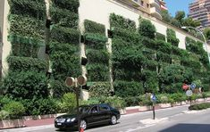 One of the first living walls realised by Mobilane 20 years ago with WallPlanters. A WallPlanter facade gives immediate natural foliage impact from day 1. Its presence also contributes positively to the environment. Vertical Plant Wall, Indoor Plant Wall, Indoor Garden, Green Facade, Living Environment, Sustainability, Planters, Living Walls, 20 Years