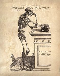 11x14 Vintage Anatomy Leaning Skeleton Human Body by curiousprints, $15.00