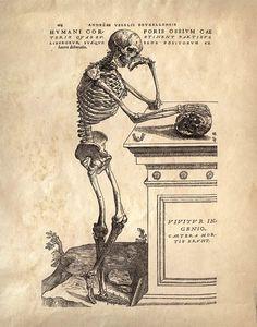 Anatomie du squelette graphique de l