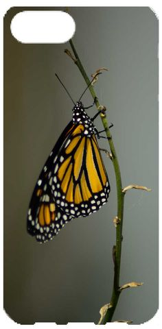 Check out this project - Monarch Butterfly - from CreatePhotoCalendars.com! Custom Photo Calendar, Butterfly Garden Plants, Butterfly Wallpaper, Create Photo, Backyard Birds, Monarch Butterfly, Art Sketchbook, Nature Photos, Butterflies