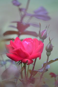Color in the Morning Mist | Flickr – Compartilhamento de fotos!