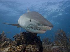 Los océanos serían los primeros en sufrir su desaparición..
