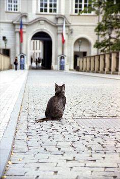 Cat on the bridge at Prague Castle