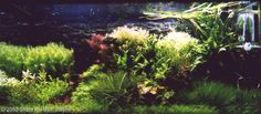 2003 AGA Aquascaping Contest - Entry #41