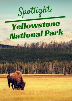 "What Delaware is to states and ""Dr. No"" is to James Bond flicks, Yellowstone is to U.S. National Parks. While our nation's national parks have grown to 59 awe-inspiring landscapes across numerous states and territories, only one national park has the distinction of being the first. Spotlight: Yellowstone National Park http://www.active.com/outdoors/articles/spotlight-yellowstone-national-park"