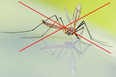 Domáce repelenty proti komárom