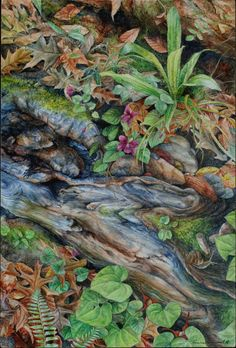 Forest Tapestry watercolor, Kathleen O'Connell [illustrates a good idea of having an exposed area of log that would be too slick to grow on and leaves would slide right off. Also a good idea of how water can influence an area - replace the wood grain with water and you have a stream-side layout]
