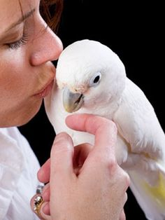 Want to know the top 10 #names for #pet #birds? Here's a sneak preview...no. 4 is Kiwi.