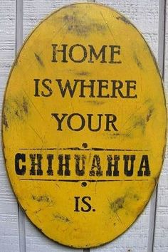 """Home is where your chihuahua is"" quote via www.Facebook.com/CuteChihuahuaFans"
