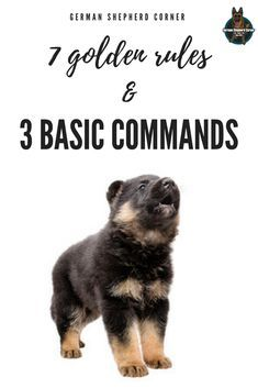 Pin By Mary Nichols On Buddy 101 Dog Training Easiest Dogs To