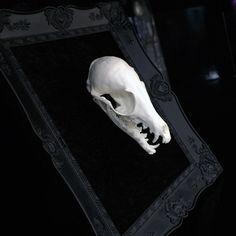Mounted Fox Skull Filigree Frame by TeacupRose on Etsy https://www.etsy.com/listing/205122192/mounted-fox-skull-filigree-frame