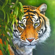 Tiger Artwork, Tiger Painting, Acrylic Painting Canvas, Canvas Art, Big Cats Art, Cat Art, Realistic Animal Drawings, Art Drawings, Art Tigre