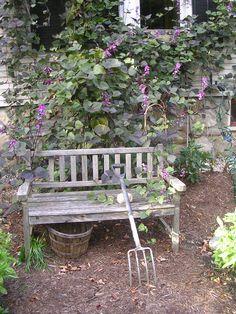 Cedar Bench smothered in flowering Hyacinth Bean.