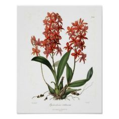 These digitized vintage botanical prints are gorgeous and the prices are vintage too!  You can get every size you need!  Make tee shirts with your own photo or art, gifts, framed art work, and more.  Check this site out!!!