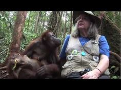 ▶ FreeAnimalVideo.org Visits OFI (Orangutan Foundation International) in Indonesia - YouTube