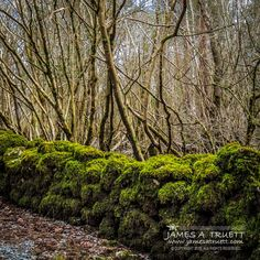 """www.jamesatruett.com - The """"Seven Woods"""" of Coole Park, County Galway, #Ireland, provided deep inspiration and serene respite from turbulent times for Nobel Prize-winning Poet W. B. Yeats: Read more in this post: http://www.jamesatruett.com/eyom"""