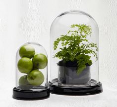 #zgallerie - Versatile glass bell jars create a delightful display. For spring, fill with fruit or foliage. How do you use them? $59.95.  I am not sure what I would put in this jar but whatever it is, it will be fabulous!