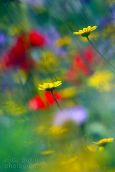 10 Secrets for Better Flower Photography
