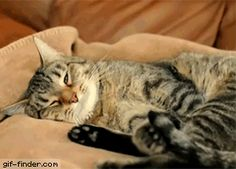 Kitty has a bad dream | Gif Finder – Find and Share funny animated gifs