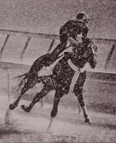 Stunning photo of Tapiture working out in a driving rainstorm this morning at Churchill Downs. (By Barbara Livingston)
