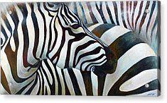Zebra 3 Acrylic Print by Michal Shimoni