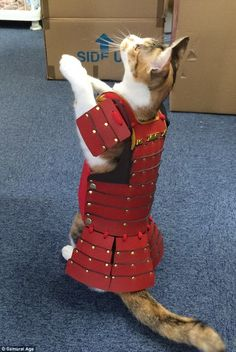 Costumes for pets can range from practical to outrageous. One Japanese company has created pet outfits that'll transform your furry friend into a samurai! Real Samurai, Samurai Armor, Samurai Costume, Pet Dogs, Dog Cat, Pets, Cat Armor, Cat Stands, All About Cats