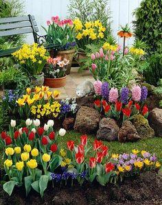 Front Gardens, Outdoor Gardens, Front Yard Garden Design, Garden Site, Outdoor Retreat, Language Of Flowers, Lawn Care, Garden Planning, Backyard Landscaping