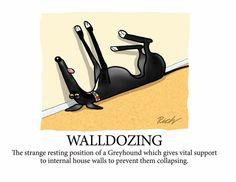 Walldozing, by Richard Skipworth
