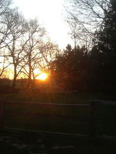 Morning sun in my backyard Morning Sun, Morning Light, Backyard, Celestial, Sunset, Outdoor, Outdoors, Patio, Backyards