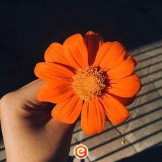 Untitled Orange Aesthetic, Rainbow Aesthetic, Aesthetic Colors, Flower Aesthetic, Aesthetic Pictures, Aesthetic Grunge, Orange Is The New Black, Orange Flowers, Orange Color