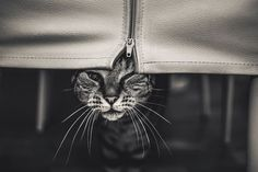 Young Woman Captures Expressive Photos of Cats to Cope with Insecurities and Bullying Memories - My Modern Met