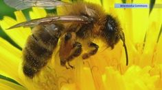 VIDEO: Study Suggests All Animals Move Alike Via 'Magic Formula'