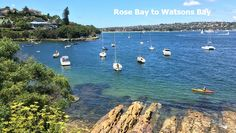 rose-bay-to-watsons-bay-walk