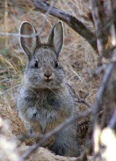 cute gray bunny