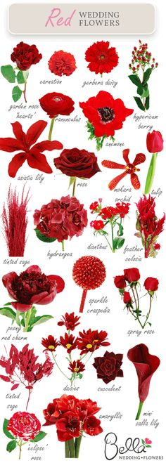 Red wedding flowers – did you know there were so many? on http://www.bellaweddingflowers.com/blog