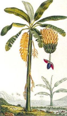Tropenfrüchte Pineapple, Fruit, Food, Jungles, Foods, Pine Apple, Essen, Meals, Yemek