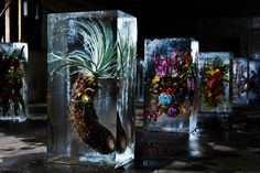 frozen flowers in ice